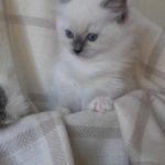 Ofelia_20170927_144102