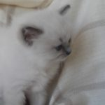 Ofelia__20170927_113838